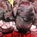 Barbet Margot: ouf, ils dorment!