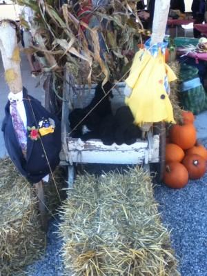 Les barbets en visite au marché publique dans le superbe kiosque de nos amis des Jardins du Centre
