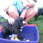 Barbet brun: Je m'entraine pour être le chien de Michaël Phelps!