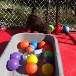 Barbet: Hé, on joue pas avec la boite, on joue avec le cadeau!